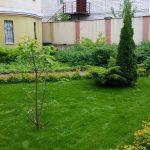 Посевной газон на 10-й день