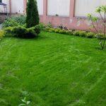 Посевной газон  на 10-й день посева.  Первый укос.