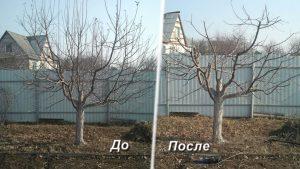 как правильно обрезать дерево осенью