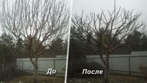 Цены обрезку деревьев в Воронеже