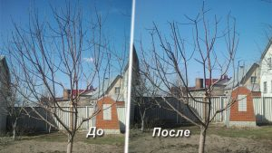 обрезка деревьев в Воронеже