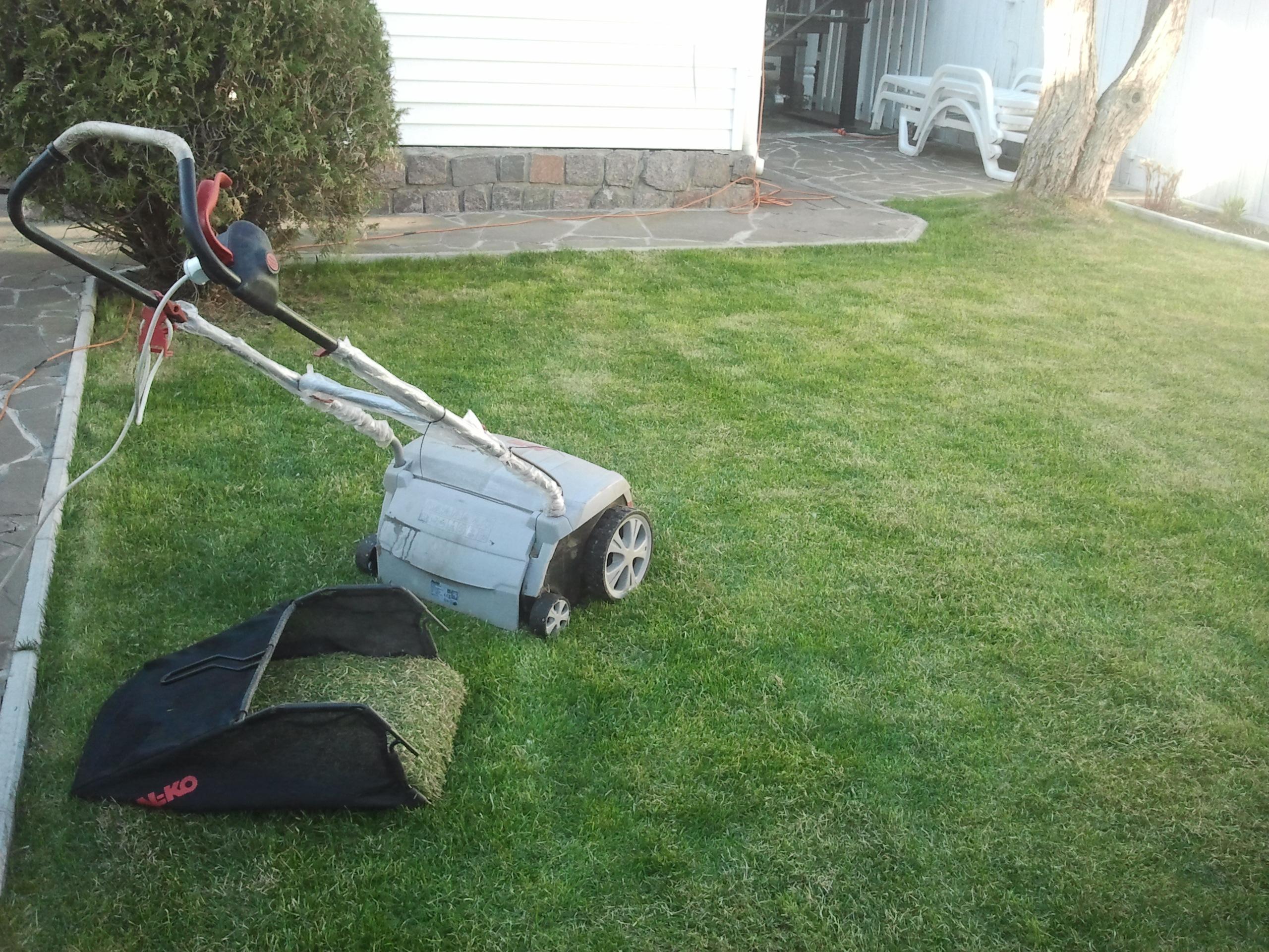 Распространённые вредители и болезни газона на дачном участке: способы лечения газона