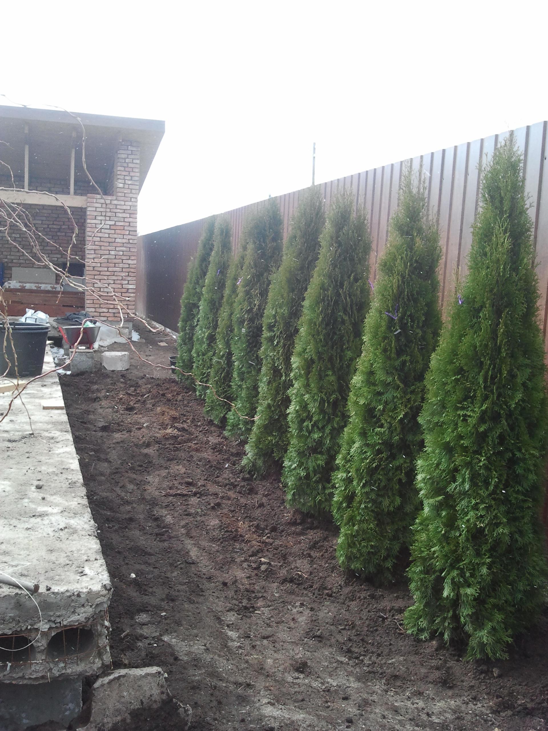 схема посадки деревьев и кустарников на садовом участке