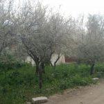 Поражение горностаевой молью