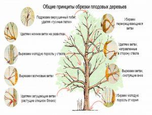 обрезка сада в Воронеже