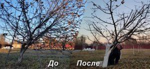 обрезка деревьев осенью