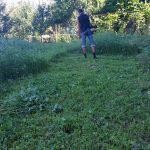 Скос сорняка