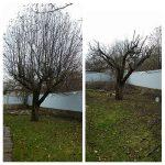 Дерево до и после