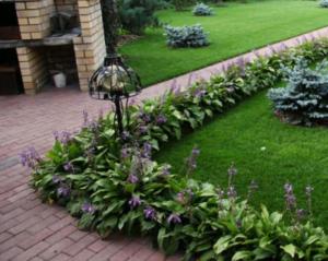 Правила создания растительных бордюров