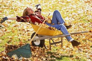 Какие работы проводить в осеннем саду