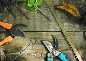 Какие инструменты необходимы для ухода за садом