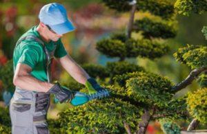 Что нужно знать начинающему садоводу