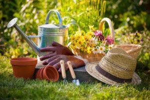 Когда проводить работы в саду