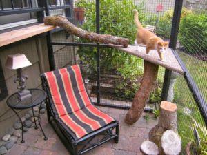 участок для кошек